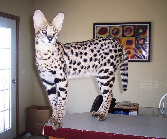 Exotic Pets That You Can Legally Own (In Most Places