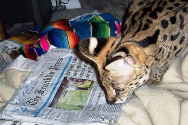 REXANO NEWS ARCHIVE press release exotic wild animal
