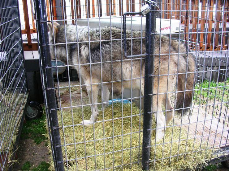 Rexano WAO-Wild Animal Orphanage Expose